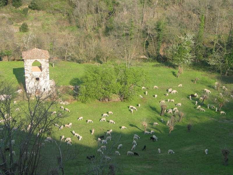 Moutons au Pigeonnier
