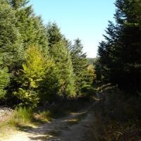 Sentier de rando